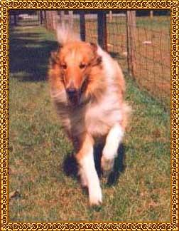 Our Dog--Cowboy