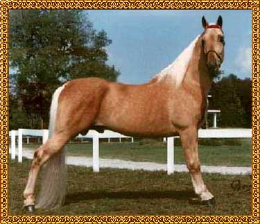 BELLE'S GOLD NUGGET - click on photo to load pedigree.